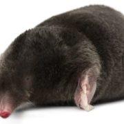 Lovely mole