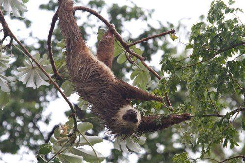 Lovely sloth