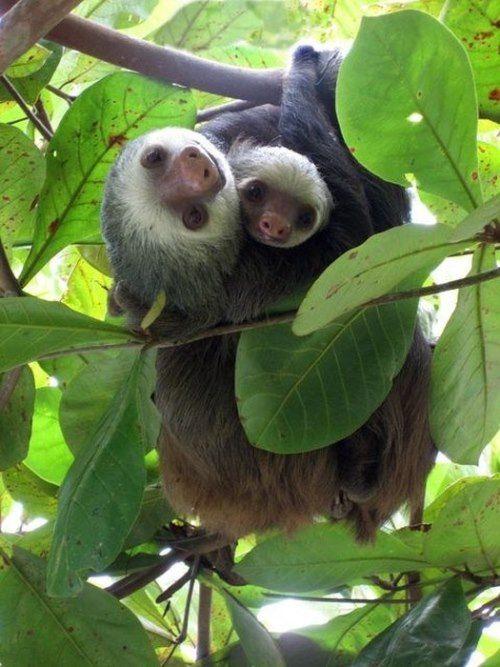 Magnificent sloths