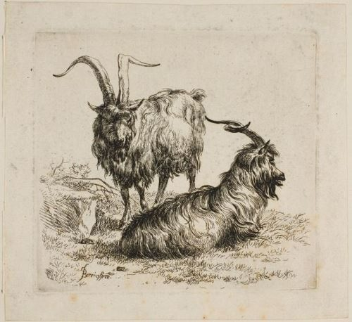 Nicolaes Pietersz Berchem. Goats, from Various Animals
