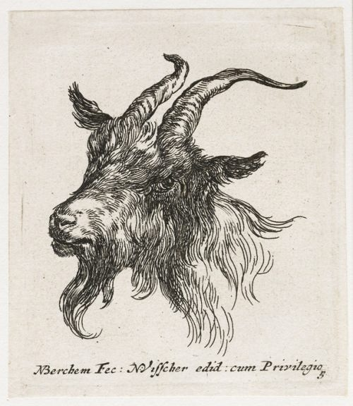 Nicolaes Pietersz Berchem. Goat's head