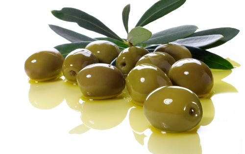 Olive - Plant of Peace and Plenty