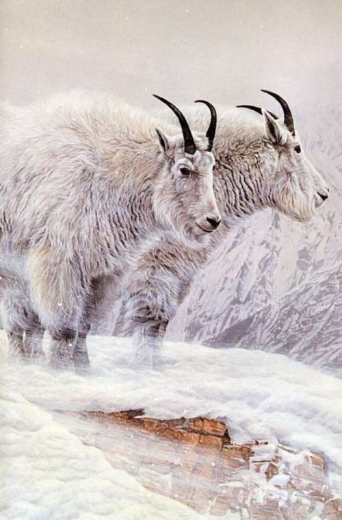 Parker, Ron - Mountain Goat