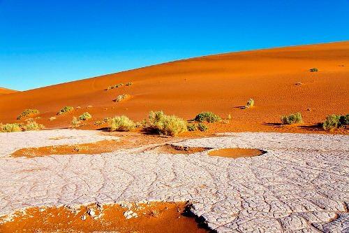 Petrified oasis
