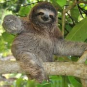 Pretty sloth
