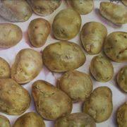 Pyotr Kozlov. Potatoes. 2002