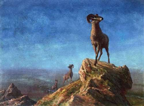 Rocky Mountain Big Horns - Albert Bierstadt