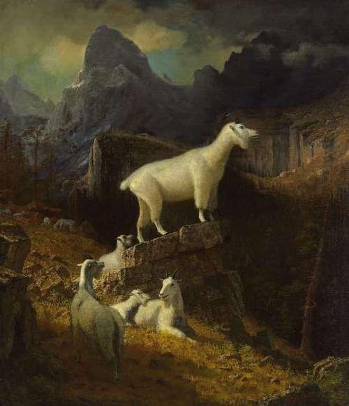 Rocky Mountain Goats - Albert Bierstadt, 1885