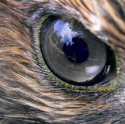Sharp falcon eye