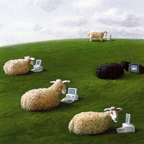 Sowa Micheal. Sheep with Lap Tops