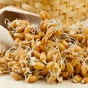 Sprouted wheat grains