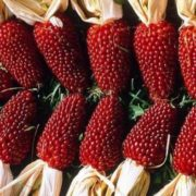 Strawberry corn