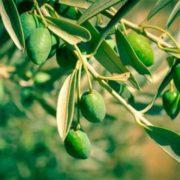 Stunning olive