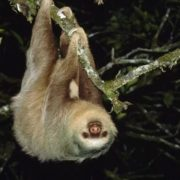 Stunning sloth