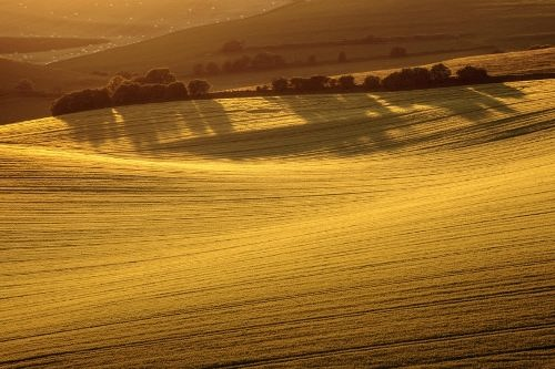 Stunning wheat. Photo by Finn Hopson