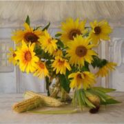 Sunflowers and maize