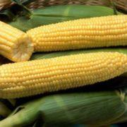 Tasty maize