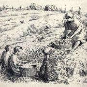 Vsevolod Voinov. Picking potatoes. 1939