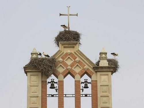 White storks on an ancient bell tower