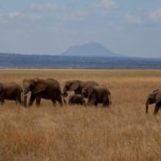 Wonderful Tarangire National Park