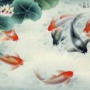 Wonderful koi