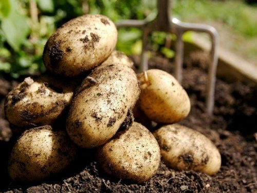 Wonderful potatoes