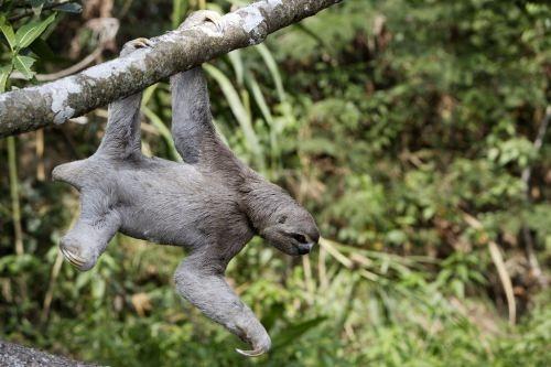 Wonderful sloth