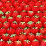 Wonderful strawberry