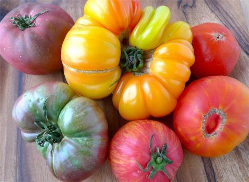 Wonderful tomatoes