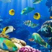 African underwater world