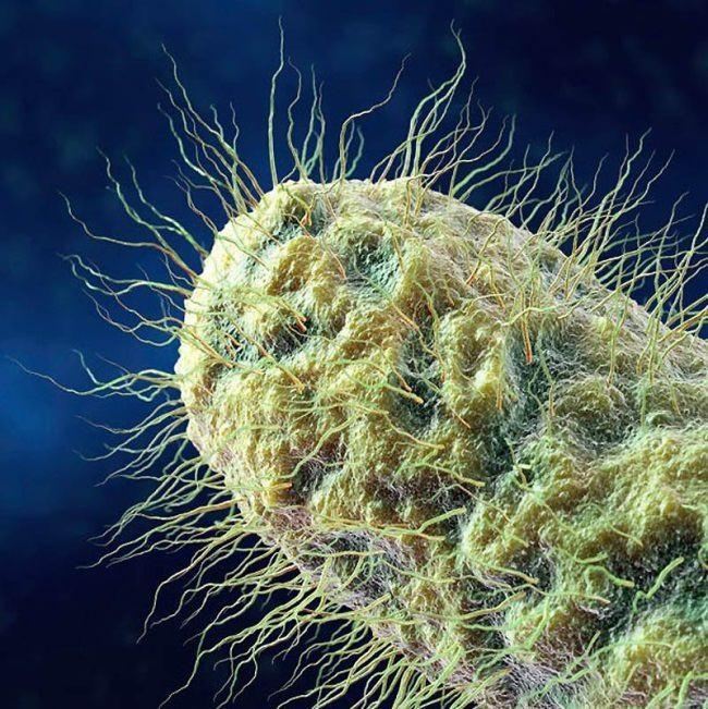 Attractive bacteria