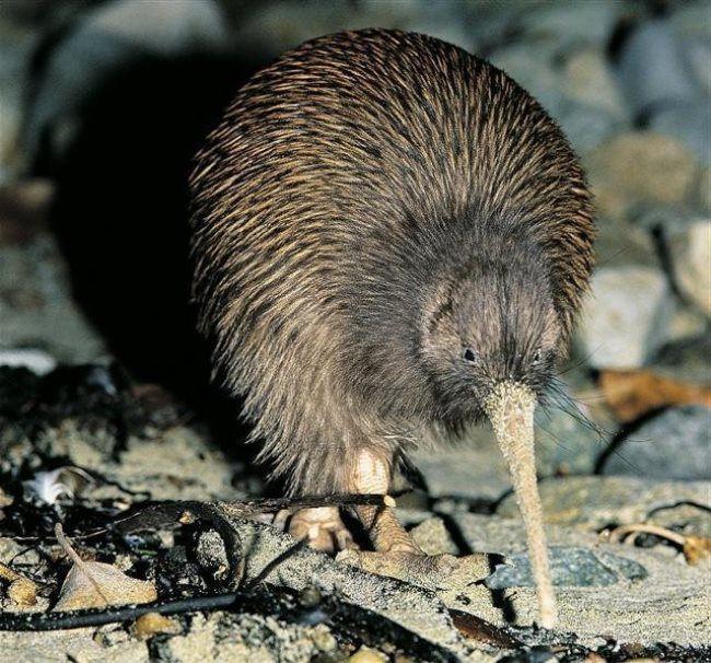 Awesome kiwi