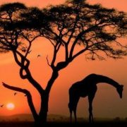 Beautiful Africa