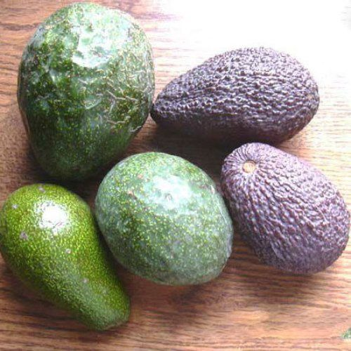 Beautiful avocados