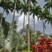 Charming Barbados