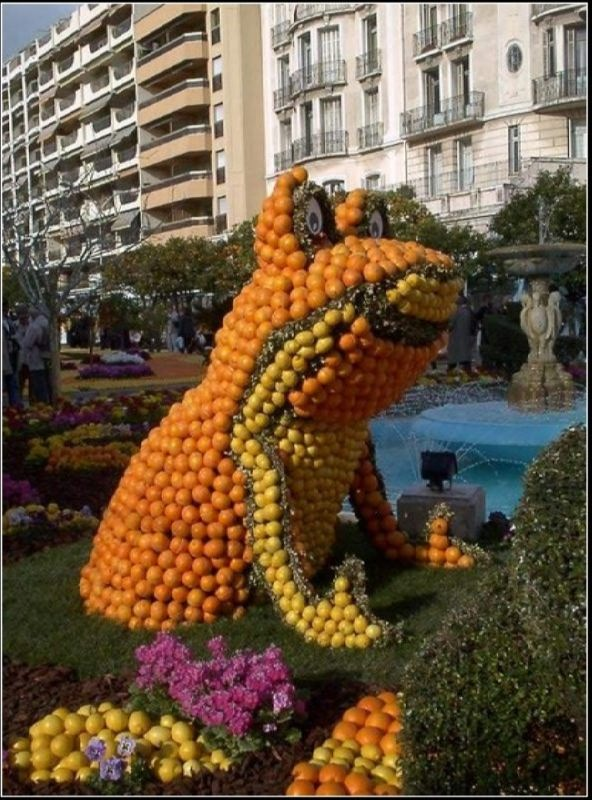 Day of the orange. Citrus festival in Amsterdam