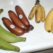 Different bananas