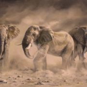 Elephants by Karen Laurence-Rowe