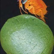 Flea on the ball