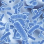 Gorgeous bacteria