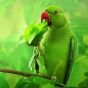 Gorgeous parrot