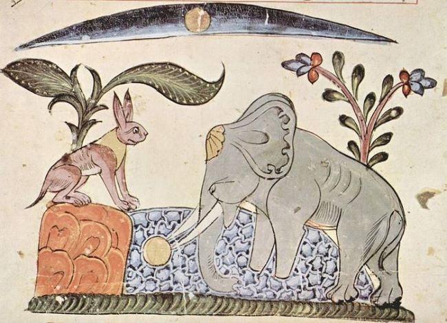 Hare and elephant