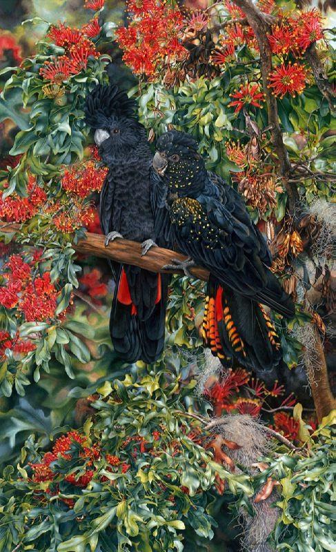 Heidi Willis Black Cockatoo and Stenocarpus