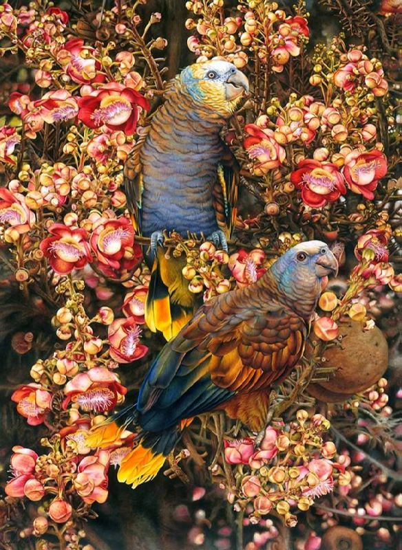 Heidi Willis. St Vincents Amazon Parrots and Cannonball Tree