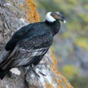 Interesting condor