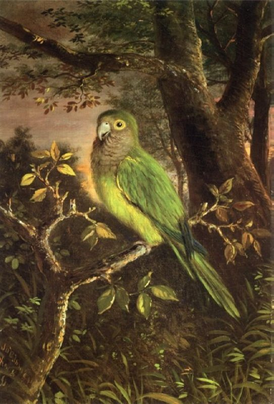 John O'Brien Inman. Parrot on a Branch, 1891