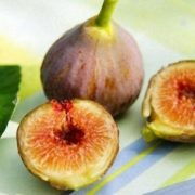 Magnificent fig
