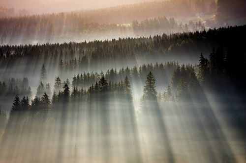 Misty landscapes on photos by Boguslaw Strempel