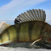 Pretty bass