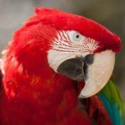 Stunning parrot